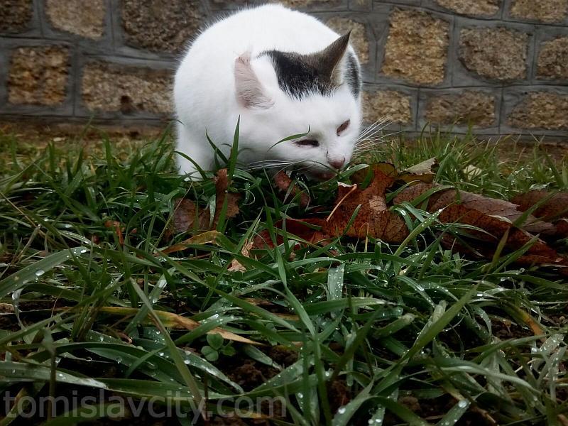 mlada lijepa maca